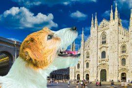 Besuch-im-Duomo-von-Mailand-der-Terrassen-und-archäologischen-Gebiet-mit-einem-Hund-mit-Hundesitter