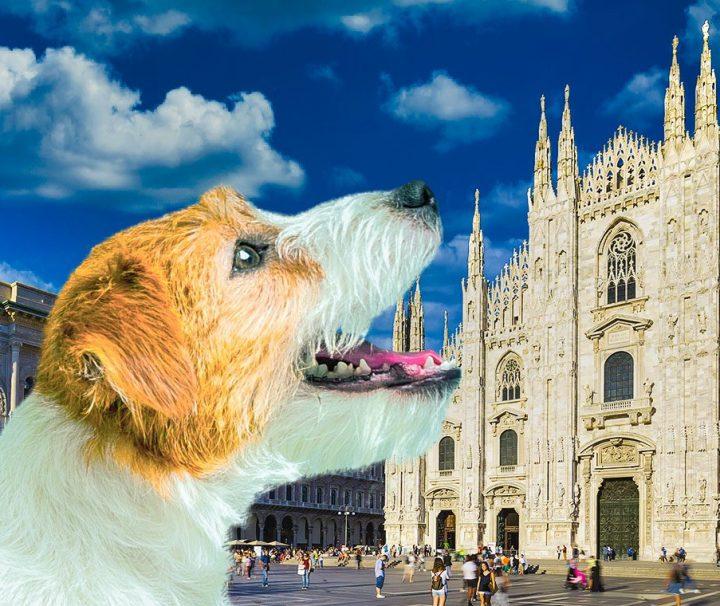 Visita-al-Duomo-di-Milano-le-terrazze-e-area-archeologica-con-un-cane-con-dog-sitter