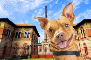 6-legged-treasure-hunt-Crespi-Adda-UNESCO-heritage-among-dogs-history-and-culture