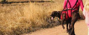 in-escursione-con-un-cane-la-sicurezza-prima-di-tutto