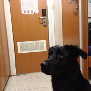 Imbarcati con la grandi navi veloci vacanze con il cane for Animali domestici della cabina di nashville