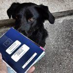 Passaporto del cane