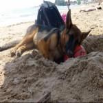Vacanze con il cane in Sicilia