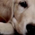 Non abbandonare un amico cane