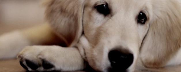 non-abbandonare-un-amico-cane