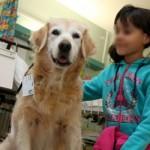 Visite e cure all' ospedale con il proprio amico cane a Milano