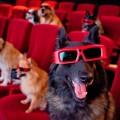 con un cane al cinema