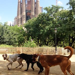 Area cani davanti la Sagrada Familia a Barcellona