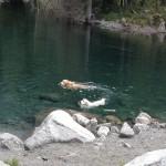 Vacanze con il cane al lago
