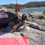Vacanze con il cane al mare