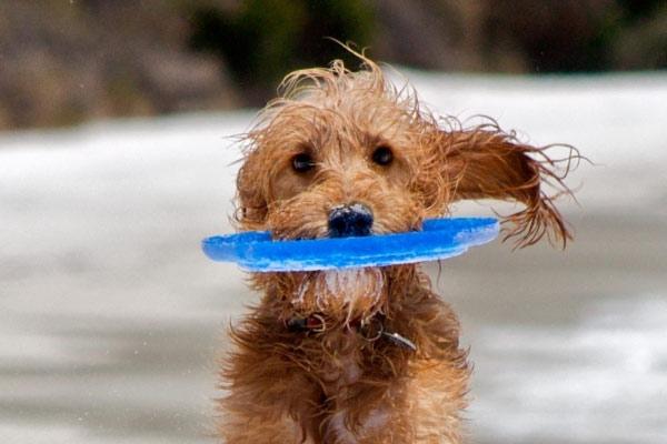 spiaggia-per-cani