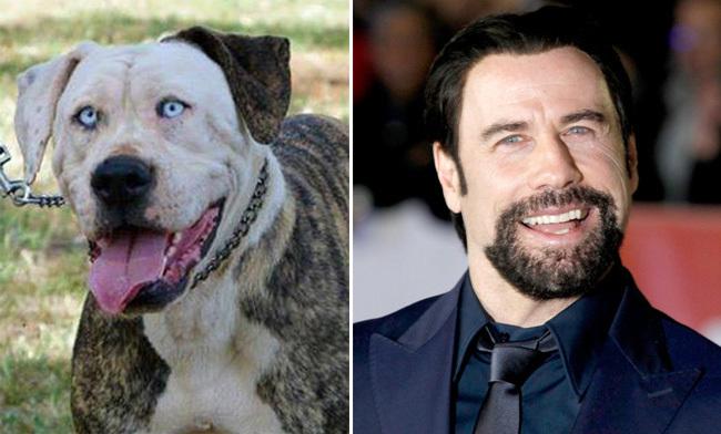 Cani e celebrità - John Travolta