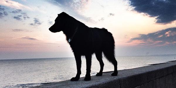 vacanze-con-un-cane-home