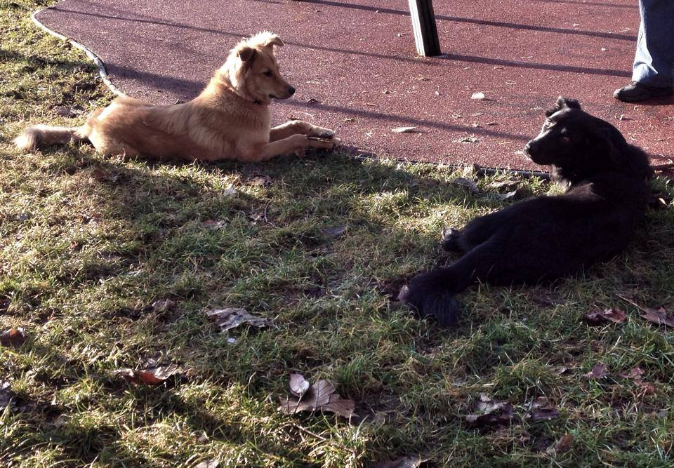 Vacanze con il cane in lombardia