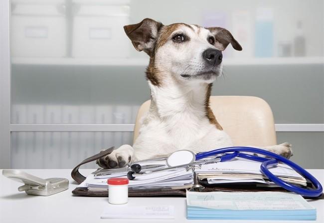 Kit pronto soccorso veterinario