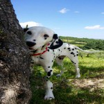 Vacanze con il cane in campagna